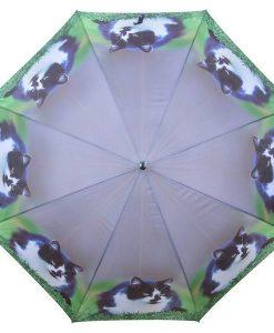 Cicás esernyők – Több fajta